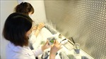 Giải mã công nghệ tạo giống lan rừng quý hiếm - Bài cuối: Ứng dụng kỹ thuật chiếu xạ gây đột biến trên hoa lan