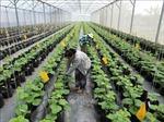 Ưu đãi, hỗ trợ doanh nghiệp đầu tư vào nông nghiệp, nông thôn