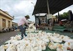 Chợ Hà Vĩ đảm bảo nguồn cung gia cầm cho thị trường Hà Nội