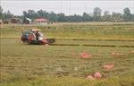 An Giang bàn giải pháp tiêu thụ hơn nửa triệu tấn lúa Hè Thu