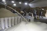 Thị trường nông sản thế giới: Giá gạo Ấn Độ cao nhất trong gần ba tháng