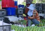 Kết nối, tiêu thụ nông sản, sản phẩm OCOP
