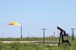 Tâm lý e ngại rủi ro đẩy giá dầu thế giới giảm 2% phiên 20/9