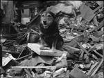Những chú chó anh hùng thời chiến