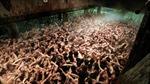 10.000 đàn ông Nhật Bản đóng khố tham gia 'Lễ hội khỏa thân'