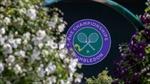Ban tổ chức Wimbledon 2020 nhận bồi thường hơn 140 triệu USD khi hủy giải