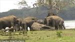 Cảm động cảnh bầy voi quần tụ 'khóc tiễn' con đầu đàn xấu số