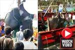 Cận cảnh ngư dân bắt được cá đuối khổng lồ nặng 1,3 tấn