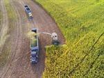 Cảnh tượng máy móc thu hoạch nông sản tại nông trại 'không người lái'