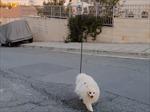 Dùng drone dắt chó đi dạo trong mùa dịch COVID-19