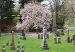 Nhiều người New York tìm đến nghĩa trang để đi dạo, thư giãn trong mùa dịch