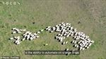 Robot chó chăn gia súc tại New Zealand
