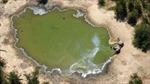Hơn 350 con voi chết bí ẩn tại Botswana với triệu chứng lạ
