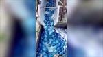 Hàng nghìn con sứa tấn công nhà máy điện tại Israel