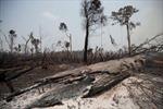 'Lá phổi xanh' của Trái Đất tiếp tục bị tàn phá nghiêm trọng