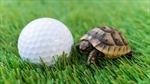 Bùng phát bệnh nhiễm khuẩn Salmonella lây từ rùa cảnh Mỹ
