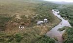 Bị gấu rừng tấn công, người đàn ông sống sót nhờ tín hiệu SOS trên nóc lều trại