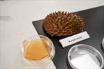 Singapore biến vỏ sầu riêng thành băng y tế kháng khuẩn