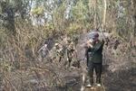 Kịp thời dập tắt đám cháy tại khu rừng keo, sát sân bay Đà Nẵng