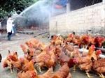 Việt Nam đã khống chế thành công dịch bệnh cúm gia cầm