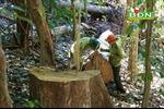 Để mất hơn 300 ha rừng, một doanh nghiệp bị thu hồi dự án nông lâm nghiệp