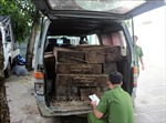 Dùng xe ô tô biển số giả vận chuyển gỗ trái phép