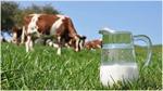 Khám phá 5 đặc quyền chỉ dành cho tín đồ của sữa Organic chuẩn Hà Lan