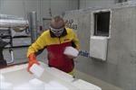 DHL Global Forwarding sẽ vận chuyển các lô vắc xin phòng chống COVID-19 hàng tuần đến Australia