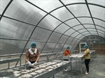 Nhà máy sấy năng lượng mặt trời – giải pháp sạch trong chế biến thực phẩm