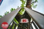Nhiều cây sưa đỏ ở Hà Nội bị chết: Cần xem xét trách nhiệm để xử lý nghiêm