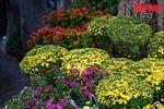 Ngắm chợ hoa trong ngày rằm tháng Chạp