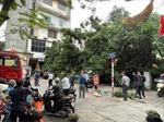 Cây xanh bật gốc, đè trúng ô tô trên phố Lê Quý Đôn (Hà Nội)