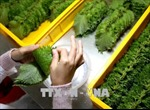 Mang thực phẩm tươi sống, rau, hoa quả vào Nhật có thể bị phạt tới 200 triệu đồng