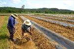 Phản hồi thông tin của TTXVN: UBND tỉnh Phú Yên yêu cầu cung cấp nước sinh hoạt cho người dân