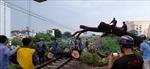 Thông tuyến đường sắt Bắc – Nam sau nhiều giờ tê liệt do cây xanh đổ chắn ngang đường ray