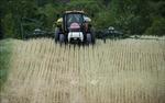 Chính phủ Mỹ hỗ trợ 13 tỷ USD cho nông dân bị ảnh hưởng từ dịch COVID-19