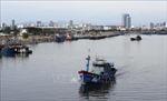Đà Nẵng tiếp tục tạm dừng hoạt động của cảng cá Thọ Quang