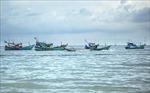 Thả rạn nhân tạo ở Khu bảo tồn biển Phú Quốc