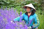 Rực rỡ làng hoa lớn nhất Nam Định vụ Tết