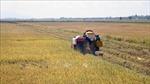 Hạt gạo có thể mang về cho Việt Nam hơn 3 tỷ USD trong năm nay