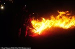 California thuê 200 tù nhân để dập tắt cháy rừng