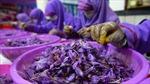 Nông dân trồng thuốc phiện ở Afghanistan đổi đời nhờ 'thần dược Trung Đông'