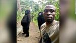 Tròn mắt xem khỉ đột Gorilla tạo dáng chuyên nghiệp như người