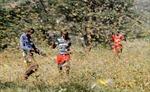 'Bão châu chấu' càn quét Đông Phi, đe dọa an ninh lương thực