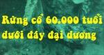 Đột phá y học từ khu rừng 60.000 năm dưới đáy đại dương