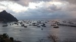 Peru quan ngại trước sự xuất hiện của đội tàu đánh cá Trung Quốc