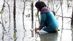 Mưa lũ bất thường gia tăng liên tiếp tại châu Á vì biến đổi khí hậu