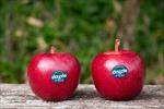 Nhà trồng táo hữu cơ lớn nhất New Zealand mở văn phòng ở Việt Nam