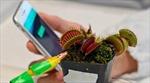 Công nghệ robot giúp người nông dân 'giao tiếp' với cây trồng