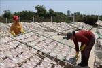 Về làng nghề cá khô Vàm Láng, Tiền Giang